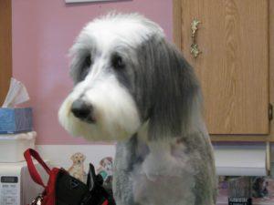 dog grooming geozoo.org