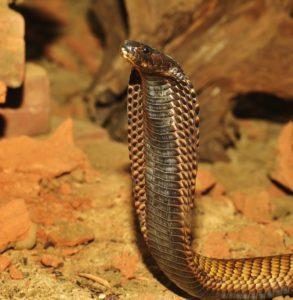 snake geozoo.org
