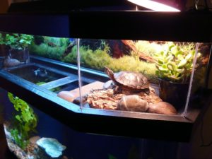 A Double Tank for Your Turtle geozoo.org