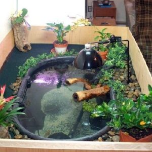 Indoor Pond 2 geozoo.org