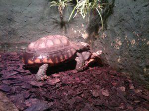 Tortoises GeoZoo.org