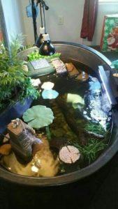 fish tank alternative geozoo.org