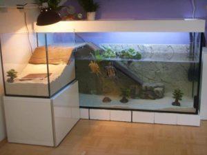indoor turtle spa geozoo.org