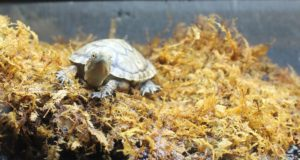 turtle_moss_animal_nature_shell_reptile_wildlife_tortoise