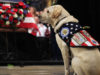Sully The Service Dog Says Goodbye 2