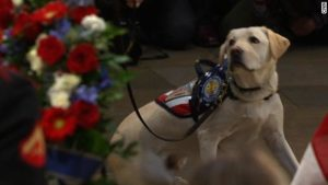 Sully The Service Dog Says Goodbye