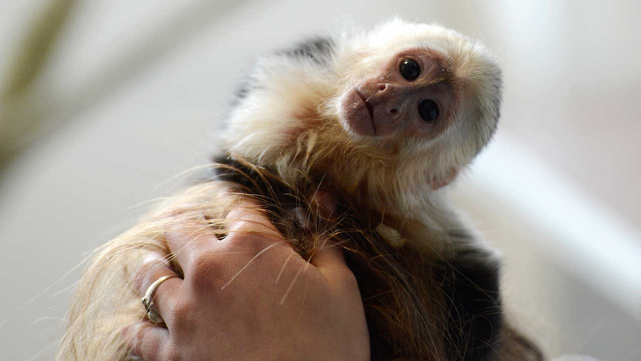 Analysis: Do You Really Need An Exotic Pet?