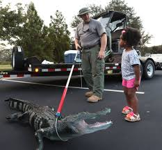 The Pros and Cons of Having a Pet Alligator man + boy