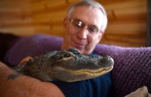 Wally, The Emotional Support Alligator