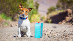 Our Guide to Traveling SAFELY With Your Pet Dog + bag