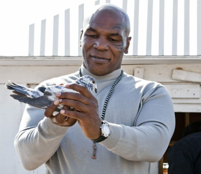 The Bizarre and True Story of Mike Tyson and his Pet Pigeons