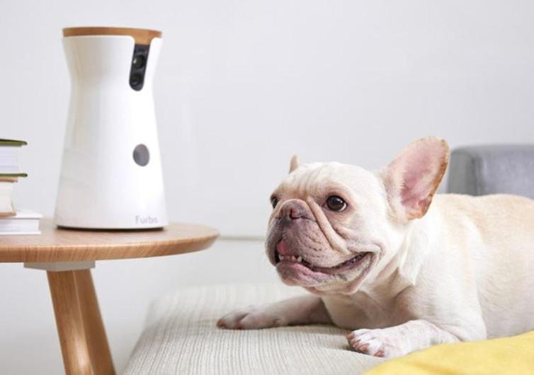 A Furbo Pet Camera and dog