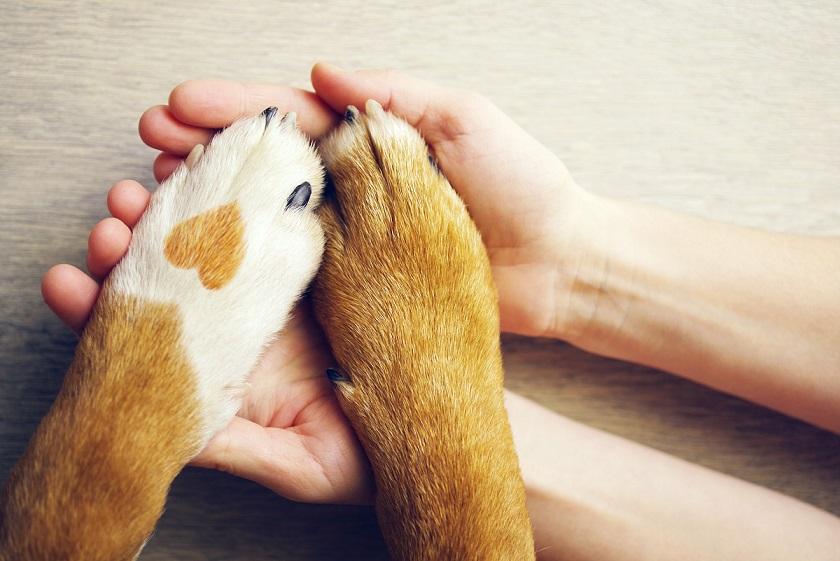 human holding paws of pet doggo